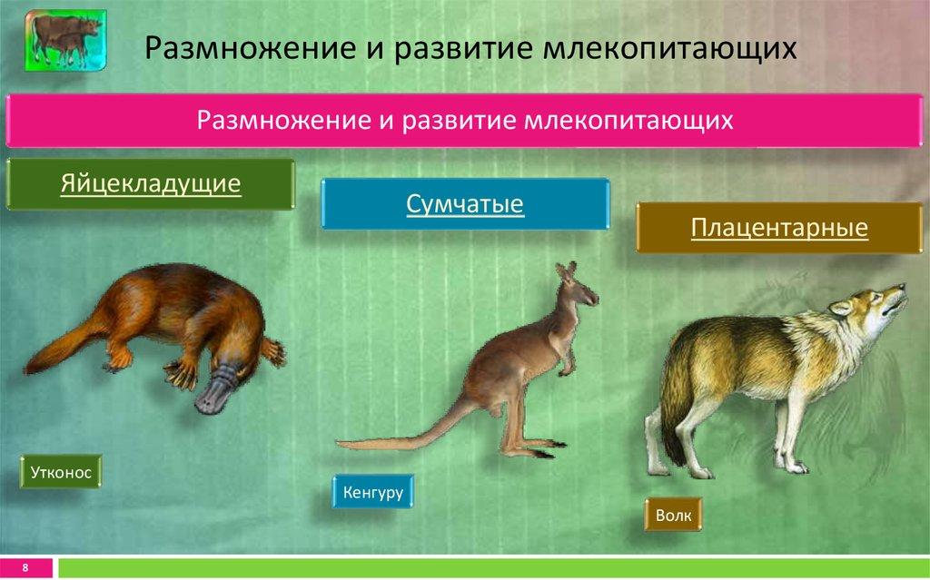 картинка развитие млекопитающих данный
