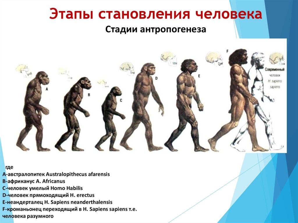 картинки этапов эволюции человека появился очень пафосно