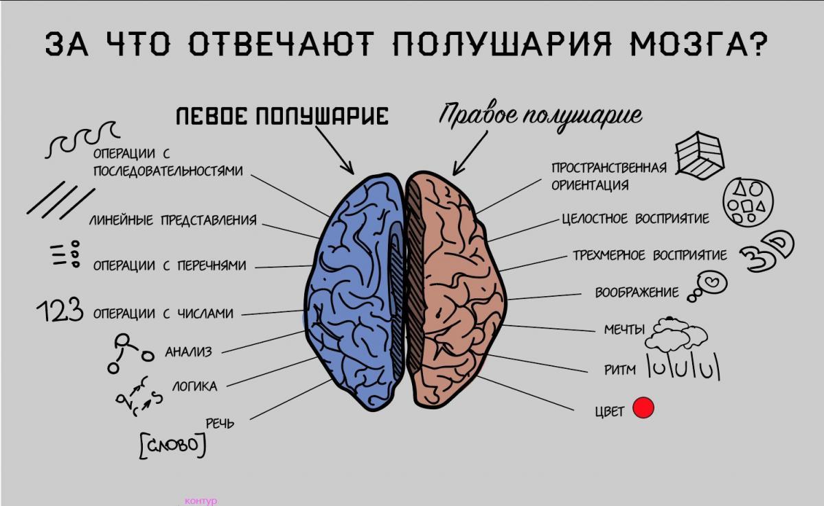 правое полушарие мозга отвечает за картинки представляет собой