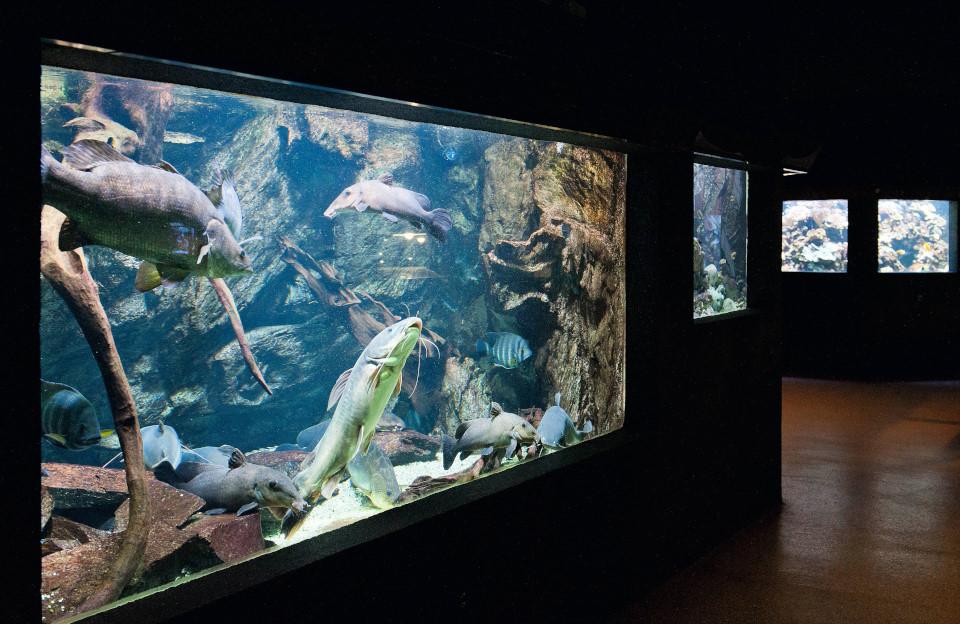 Порт-Доре: аквариум