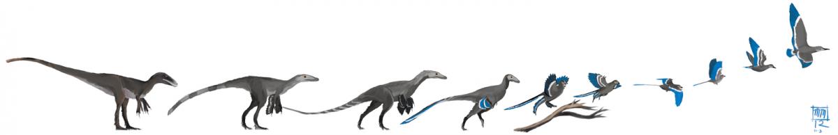 птицы произошли от динозавров всего костюмы