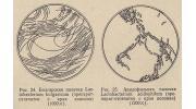 Исследования ацидофильной и болгарской палочки