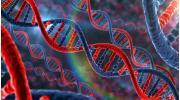 ДНК: свойства и строение молекулы, расположение в клетке. Гены и геном