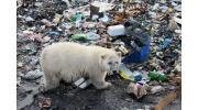 Экологические проблемы, создаваемые человеком