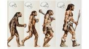 Эволюция человека: этапы развития. Происхождение от первых предков
