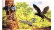 Происхождение птиц от динозавров. Общий предок птиц