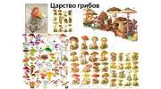 Царство грибов: особенности строения, виды, питание и размножение