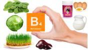 Витамин В4 (холин): для чего нужен организму и в каких продуктах содержится