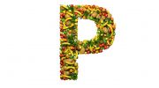 Витамин Р: исследования пользы. Где содержится и что влияет на витамин