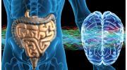 Желудочно-кишечный тракт: особенности и функции в организме человека